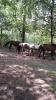 ponykamp 2017 kamp 1 05 07_42